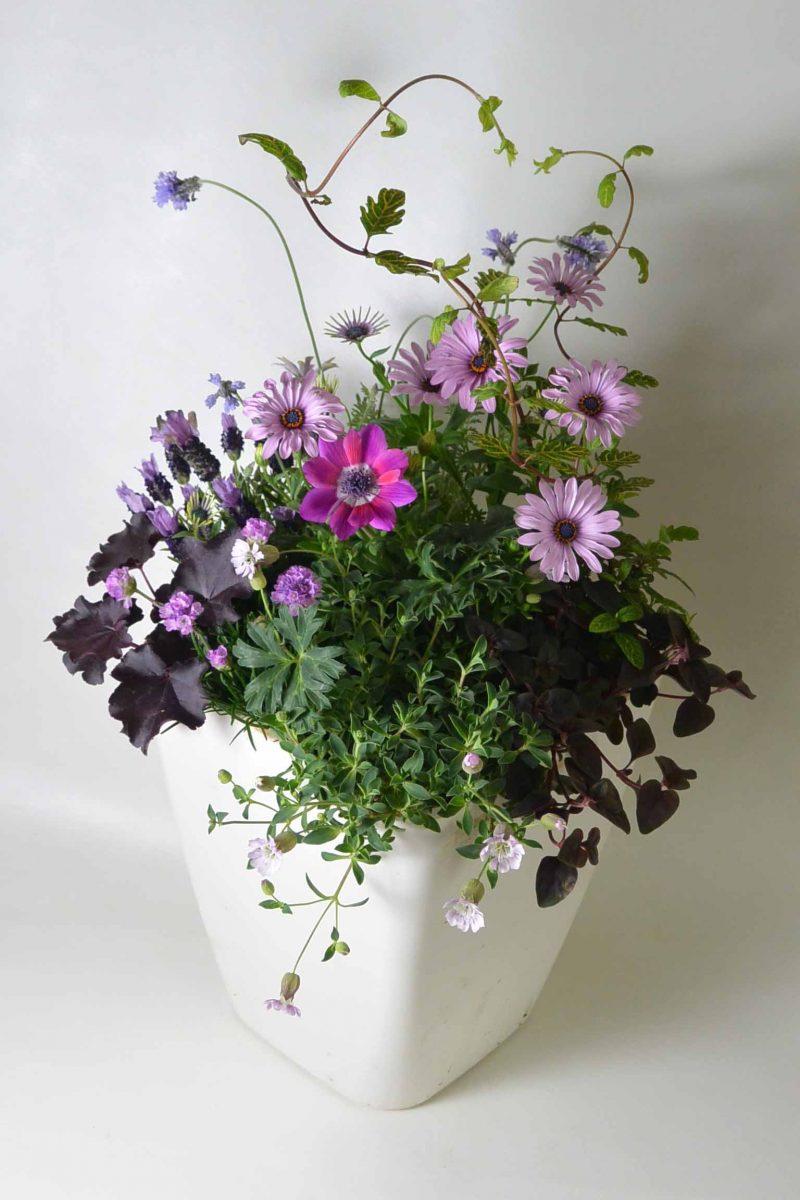 楽しく可愛い春の花の寄せ植え