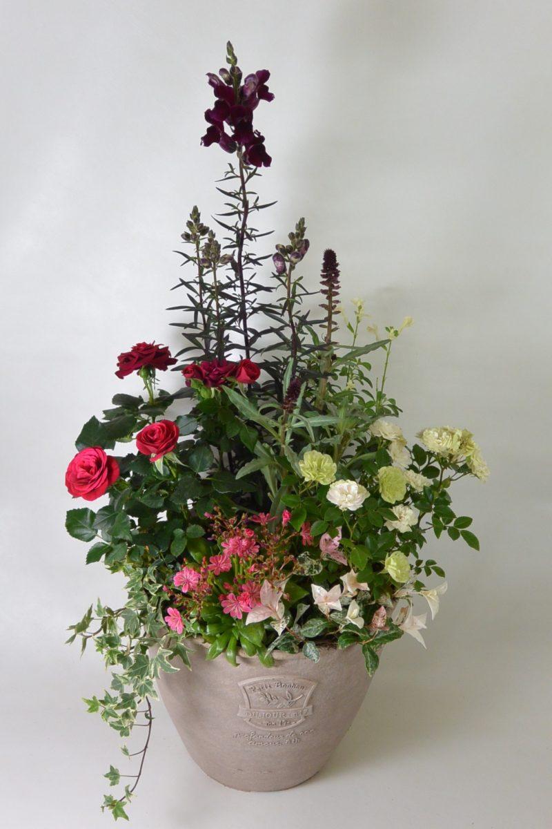 バラと宿根草を使った寄せ植え
