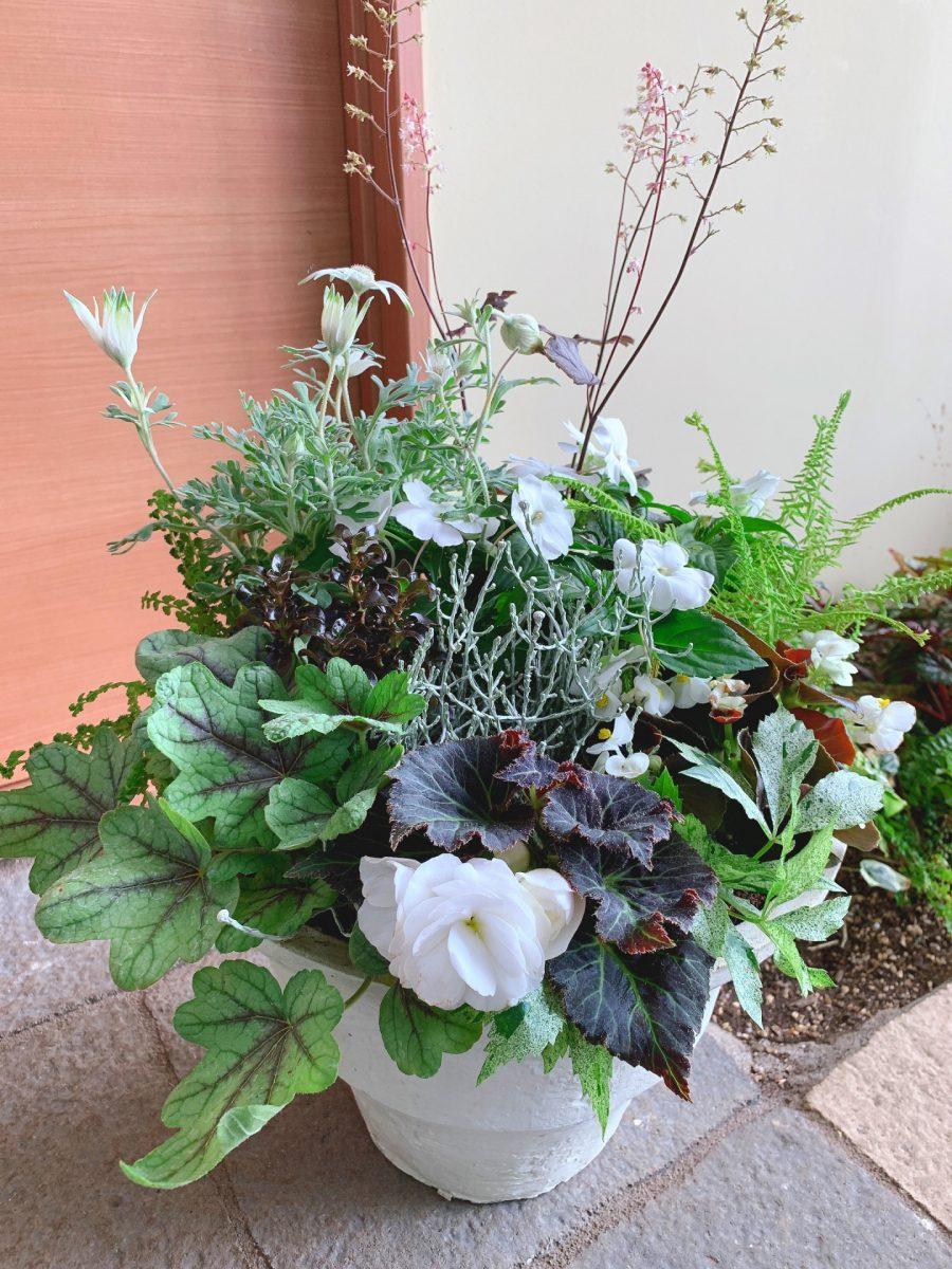涼を呼ぶホワイトとグリーンの爽やかな寄せ植え