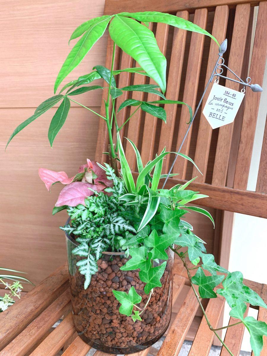 観葉植物を使って室内で楽しむハイドロカルチャー