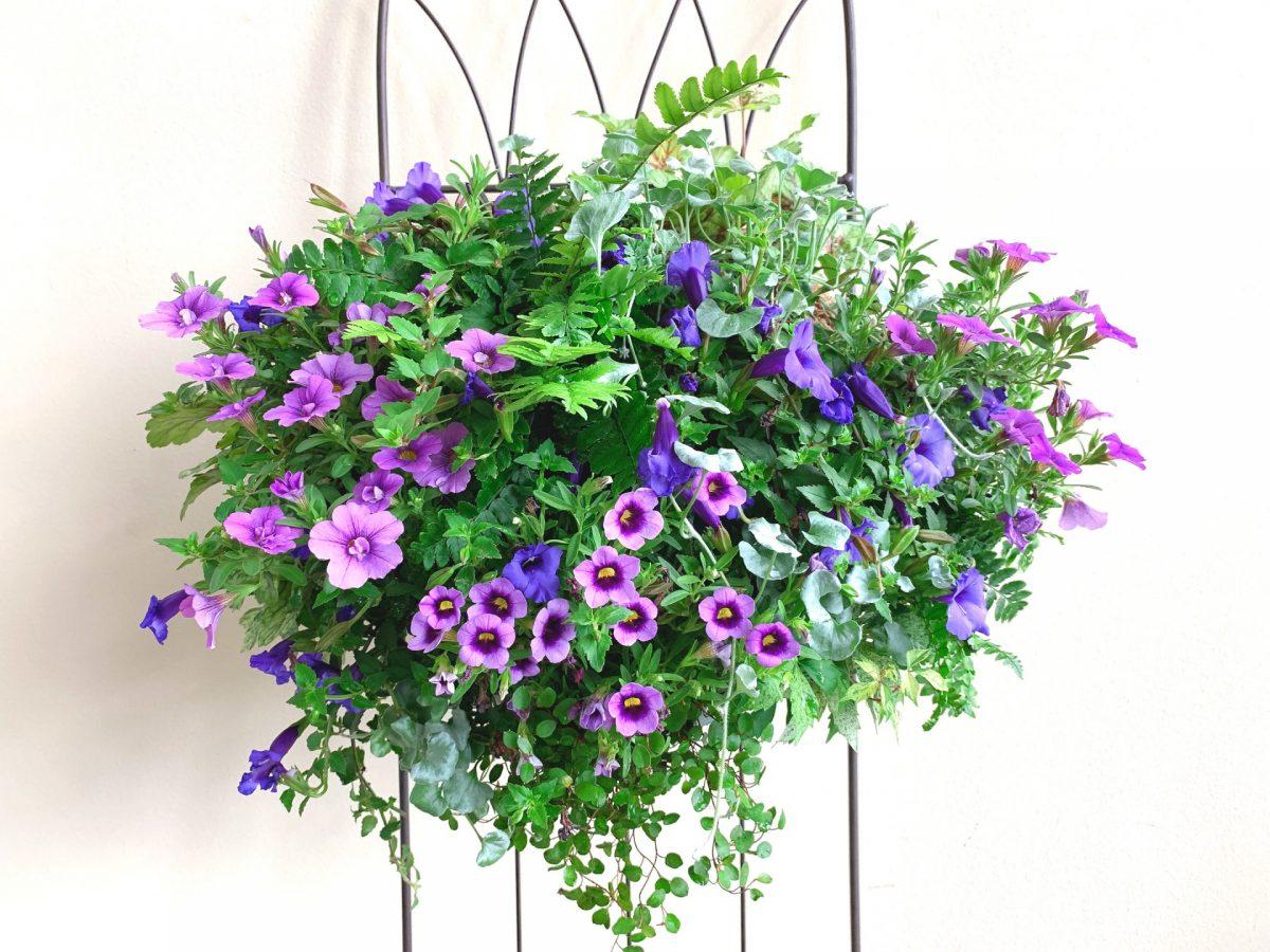 夏のつかれたハンギングや寄せ植えのリフォーム