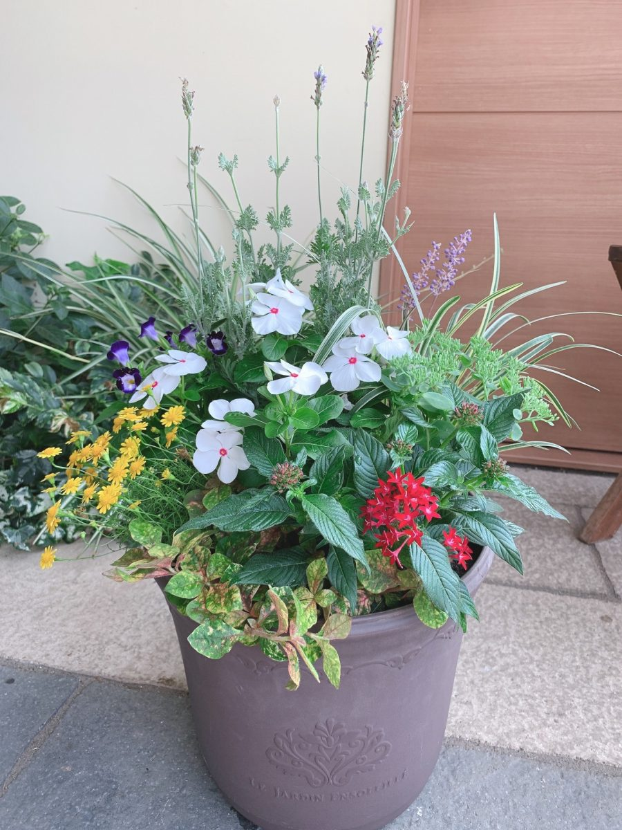 秋風を感じるリーフと花の寄せ植え