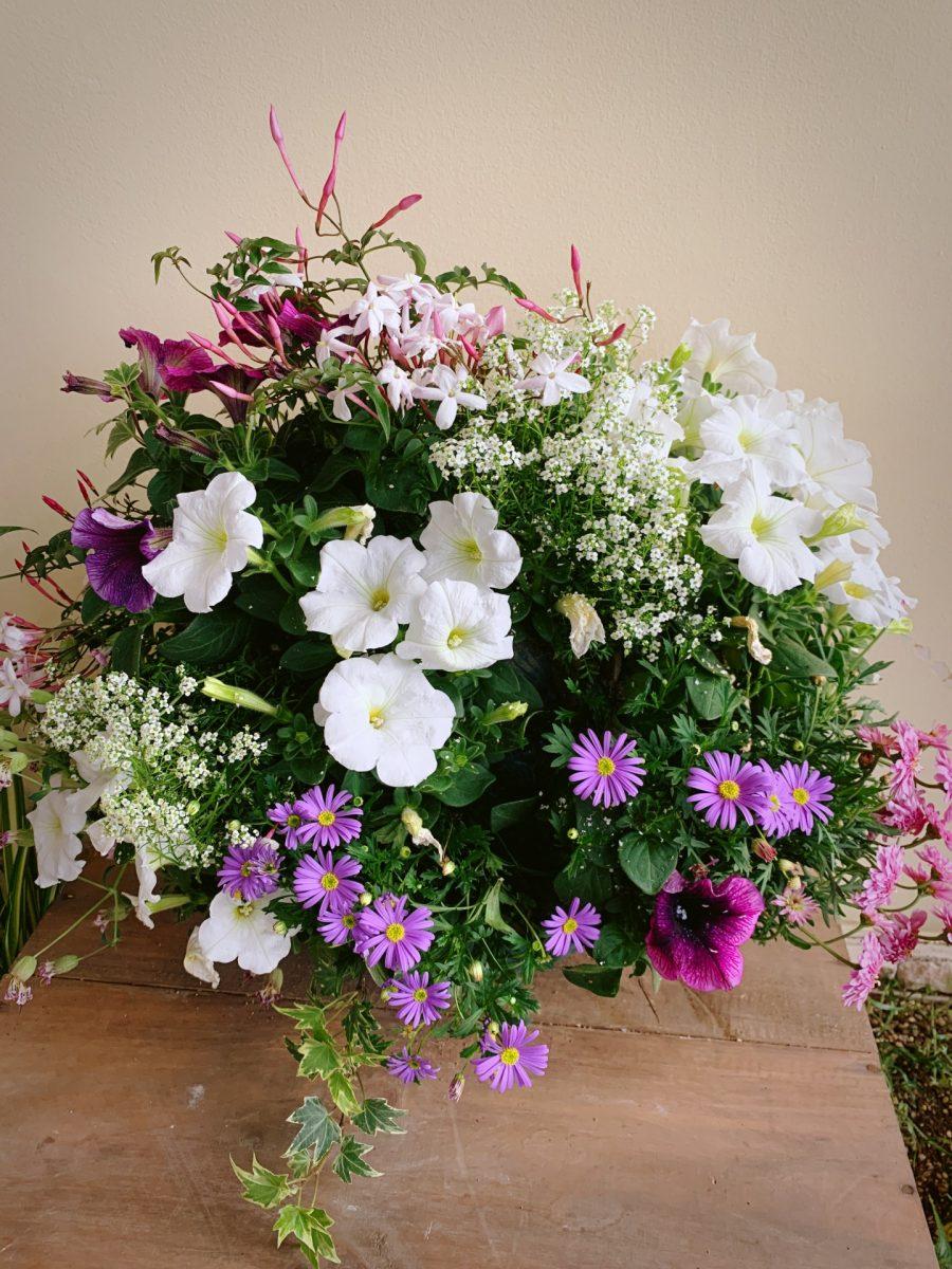 花盛り!ペチュニアの華やかハンギングバスケット